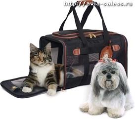 Правила перевозки животных в самолетах 2015